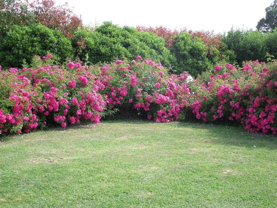 Le jardin de manou en normandie for Jardin jardinier normandie