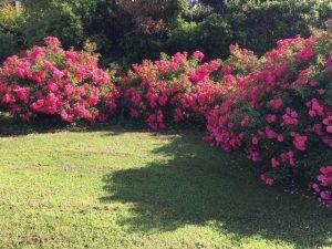 rosiers Emera